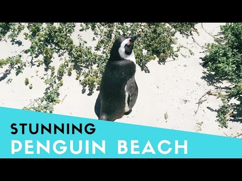 Penguin Beach - Stunning Boulders Beach - Discover Cape Town #3 | GAY COUPLE