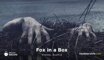 "Bears' Escape ""Fox in a Box"" in Vienna"