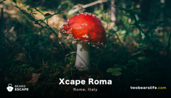 "Bears' Escape ""Xcape Roma"" in Rome"